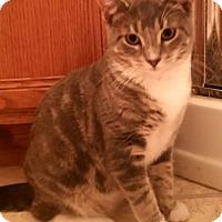 Adopt A Pet :: Andes - Addison, IL