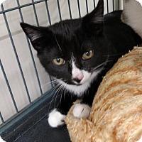 Adopt A Pet :: SAMMY - Smithtown, NY