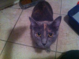Domestic Mediumhair Cat for adoption in Baton Rouge, Louisiana - Nala