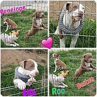 Adopt A Pet :: Ella - Sacramento, CA