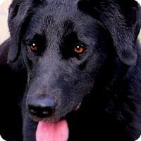 Adopt A Pet :: BARBIE(FUN-PLAYFUL-SO SMART!! - Wakefield, RI