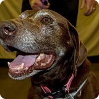 Adopt A Pet :: Sally - Clovis, CA