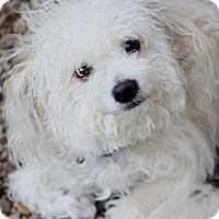Adopt A Pet :: Diego - Woonsocket, RI