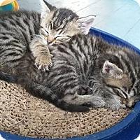 Adopt A Pet :: Fiona - Covington, KY