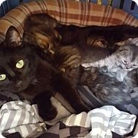 Adopt A Pet :: Mama - New Kensington, PA
