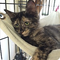 Adopt A Pet :: Lemon - Lunenburg, MA