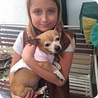Adopt A Pet :: LOLA - Pacific Palisades, CA