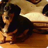 Adopt A Pet :: Sadie - Andalusia, PA