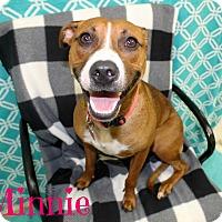 Adopt A Pet :: Minnie - Melbourne, KY