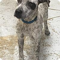 Adopt A Pet :: April - Bedford, TX