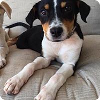 Adopt A Pet :: Ridge - Milton, GA