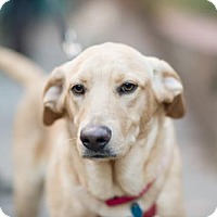 Adopt A Pet :: Keiran (Has Application) - Washington, DC