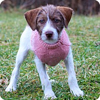 Adopt A Pet :: Julia - Waldorf, MD
