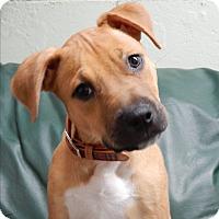 Adopt A Pet :: Sydney - Long Beach, NY