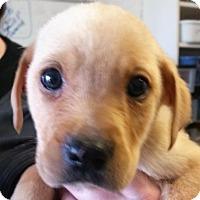 Adopt A Pet :: Twix - Bloomington, IL