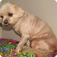 Adopt A Pet :: Mattie - Conroe, TX