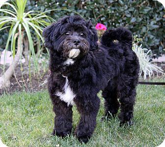 JACOB | Adopted Dog | ...
