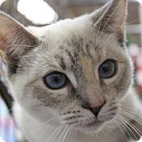 Adopt A Pet :: Carmela - Santa Monica, CA