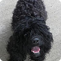 Adopt A Pet :: Annabelle - Lyme, CT