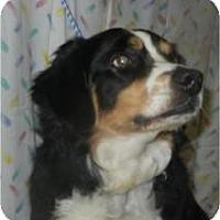 Adopt A Pet :: Opruff Winfrey - Antioch, IL