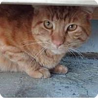 Adopt A Pet :: Tigger - El Cajon, CA