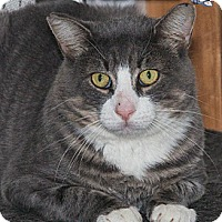 Adopt A Pet :: Austin - River Edge, NJ