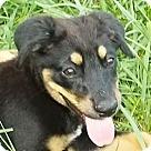 Adopt A Pet :: Fluff-Adoption Special