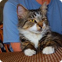 Adopt A Pet :: Tessie - Plainville, MA