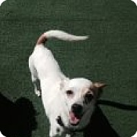 Adopt A Pet :: JASMINE - Atascadero, CA