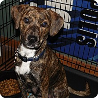 Adopt A Pet :: Abel - mooresville, IN