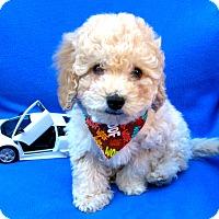 Adopt A Pet :: Manny - Irvine, CA
