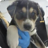 Adopt A Pet :: Jesse , Holly, Walter , Sahsa - Lincolnton, NC