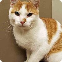 Adopt A Pet :: Butterscotch - Plainfield, IL
