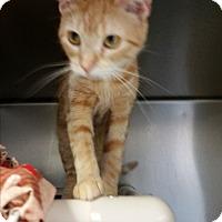 Adopt A Pet :: Caroline - Chippewa Falls, WI