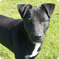 Adopt A Pet :: Keller - Foster, RI