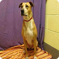 Adopt A Pet :: *PHOEBE - Upper Marlboro, MD