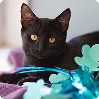Adopt A Pet :: Violet - Avon, NY