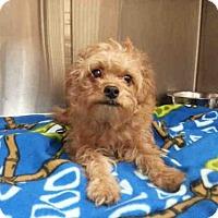 Adopt A Pet :: ODDIE - Olivette, MO