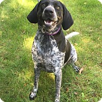 Adopt A Pet :: Reba - Mt. Pleasant, MI