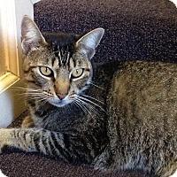 Adopt A Pet :: ABBY - San Jose, CA