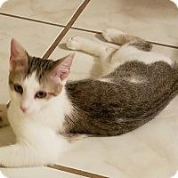 Adopt A Pet :: Laya - Jacksonville, FL