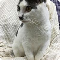 Adopt A Pet :: Phoebe - Paducah, KY