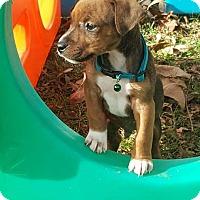 Adopt A Pet :: Rascal - Ashville, OH