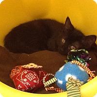 Adopt A Pet :: Tulip - Warren, OH