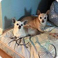 Adopt A Pet :: Maria - Covington, LA