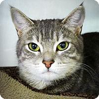 Adopt A Pet :: Luna - Casa Grande, AZ