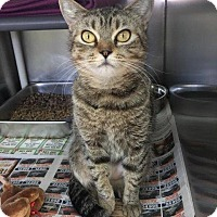 Adopt A Pet :: Hootie - Port Jervis, NY