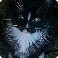 Adopt A Pet :: Spike - Whitestone, NY