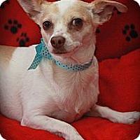 Adopt A Pet :: Gigi - san diego, CA