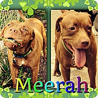 Adopt A Pet :: Meerah - Homestead, FL